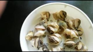 Болгария. Рыбный рынок в Бургасе. Цены на рыбу, морепродукты. Рапаны. Рецепт приготовления
