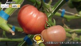 いばらきの生産者さんこんにちは「那珂市 トマト」〈那珂市〉IBS(2016.3.31)