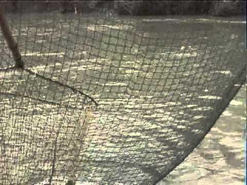 рыбалка на разливах калауса ставропольский край
