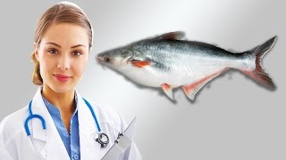 Download পুষ্টিগুনে এগিয়ে পাংগাস মাছ । Pangas fish top level nutrition benefits in bangla 3Gp Mp4