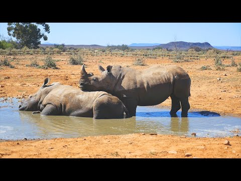 RHINO SEX FAIL | Cape Town Trip Part 3 thumbnail