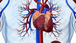 Stem Cells: Mending a broken heart?