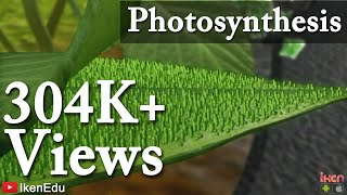 Photosynthesis and Transportation in Plants