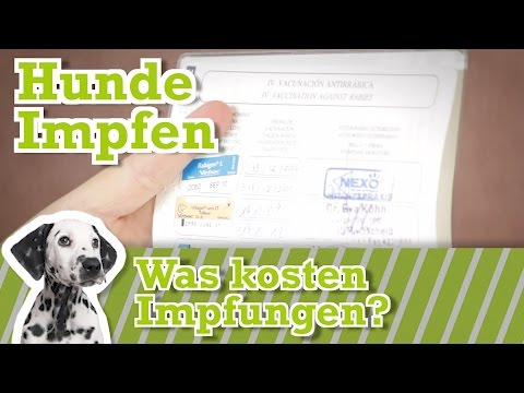 Hund impfen | Was kosten Impfungen? | Welche Impfungen braucht mein Hund?