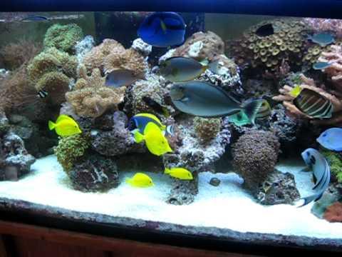 Marek S 180 Gallon Reef Tank Youtube