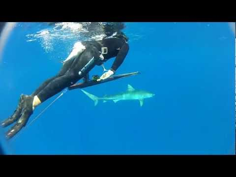 Shark Shield Unpackaging and Tiger Shark Test