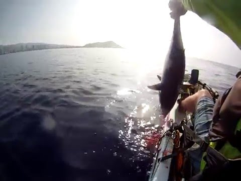 Extreme kayak fishing Hawaii pelagic double kawakawas and a bird Jackson Kayaks Penn