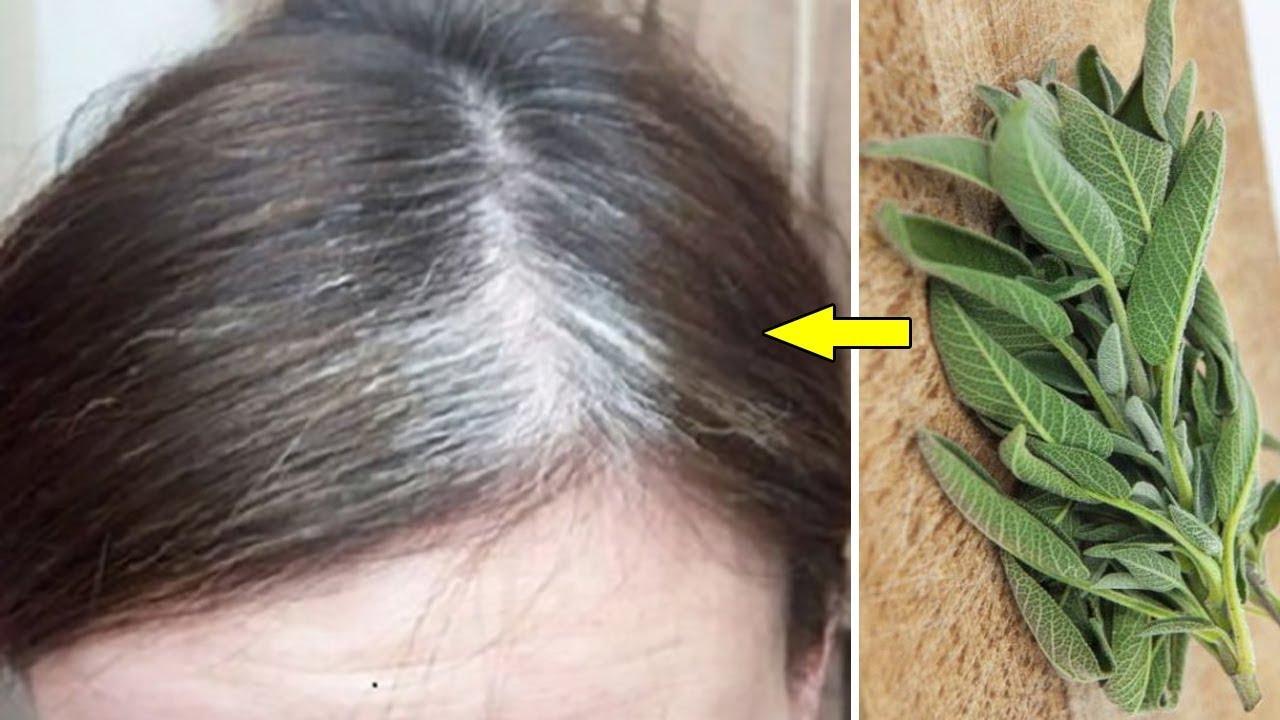 وصفة سحريه جعل لله فيها علاج الشيب في 10 ايام يصبح الشعر كما كان