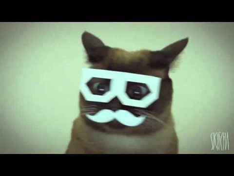 stereo skifcha ~ dubstep cat [1 hour loop]