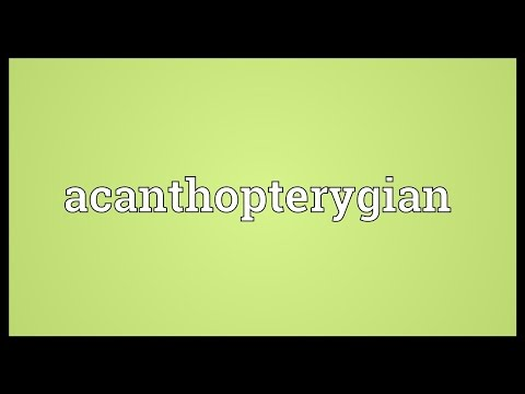 Header of acanthopterygian