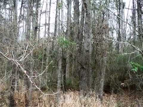 Homes for Sale - TBD Moseley St. Jefferson TX 75657 - Hagan Allen