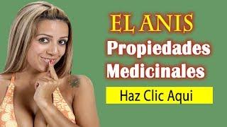 Anis Propiedades Medicinales, Beneficios Curativos del Anís|Pimpinella anisum