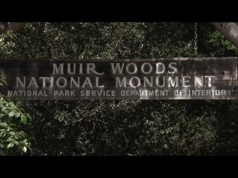 Into the Woods: PG&E Helps Bring Electric Vehicle Chargers to Muir Woods