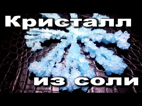 Как вырастить кристалл из соли! Опыты для детей!