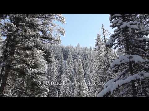 (Stock HD Nature Footage) Snowy Pine Tree Forest Slider in Sunlight With Falling Snow 1080p