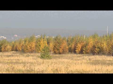 ловля реполова осенью