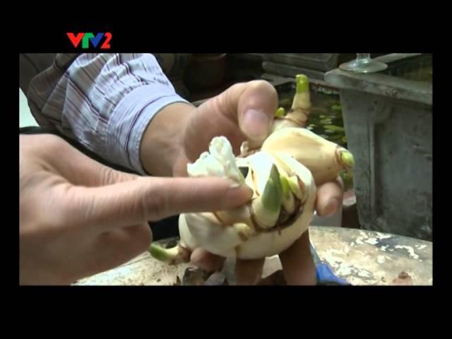VTV2 - Phong tục Việt số 2 - Phong tục Cầu may đầu xuân