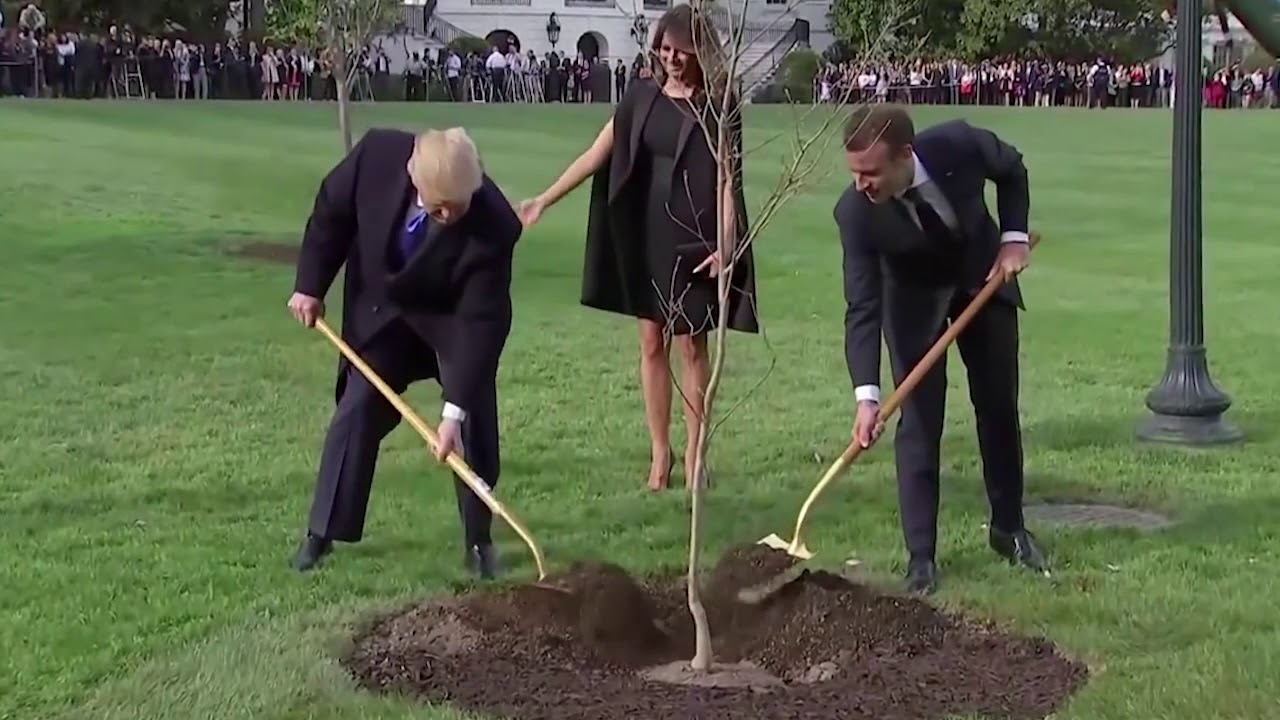 Mystery solved: Here's why the Trump-Macron friendship tree vanished from the White House grounds