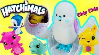 Little Live Pets Toys - ẤP TRỨNG HATCHIMALS - ĐỒ CHƠI QUẢ TRỨNG GÀ CON