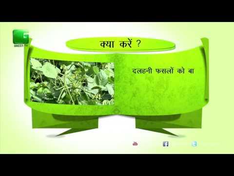 Green Gyan- Kya Karein Kya Na Karein- Fact 5 Green TV