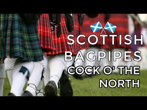 Gordon cock of the north