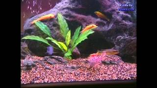 Substrate and Decorations Best for CICHLIDS