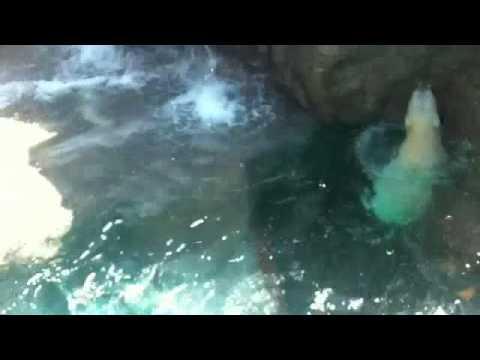 静岡日本平動物園 ロッシー