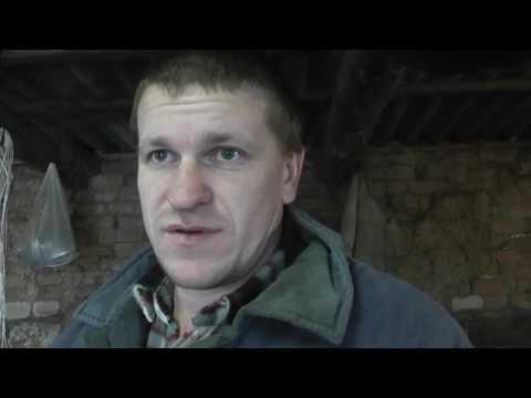 Содержание коровы в зимнее время // Жизнь в деревне