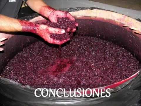 Elaboracion de Vino Casero el Vino y su Elaboracion