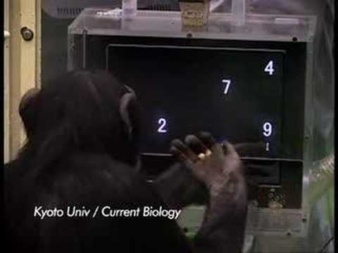 ABC News, Chimps vs Humans