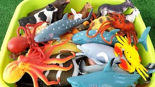 Learn Colors With Wild Animals and Farm Animals Sea Animal Octopus Sharks in Water Tub Toys For Kids