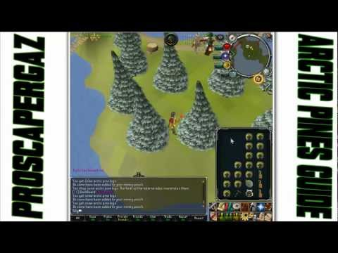 RS Woodcutting Guide – Arctic Pines 100k+ xp/h