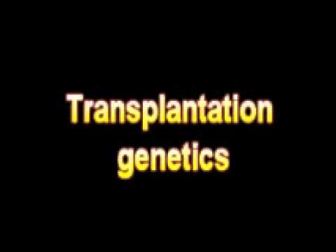 What Is The Definition Of Transplantation genetics