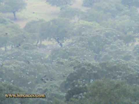 Contemplando a las Torcaces en la Sierra San Pedro