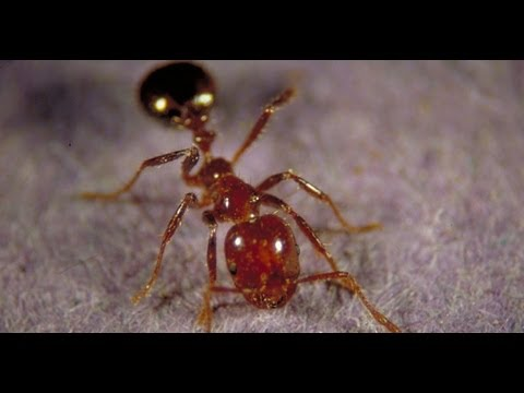 How to Get Rid of Ants Naturally  ANTS