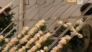 B201 Aumento Producción de Plantas y Flores de Ornato