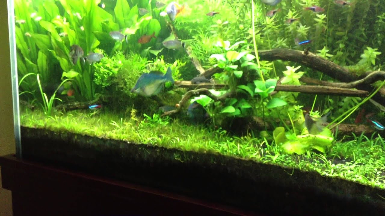 substrate for a planted tank
