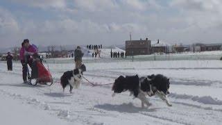 犬ぞりが雪原を疾走