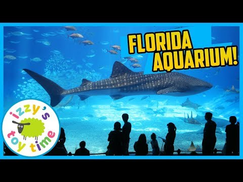 FLORIDA AQUARIUM WITH IZZY'S TOY TIME! Family Vacation VLOG AND SPLASH PAD FOR KIDS