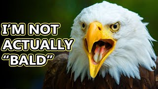 Bald Eagle facts: a Symbol of North America | Animal Fact Files