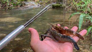 Catching *RARE* Freshwater SHRIMP in Natural Creek!!!