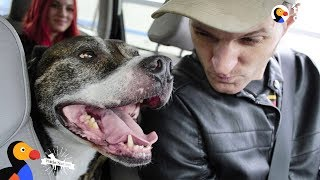 Veteran Rescues Pit Bull Dog Who Rescues Him Right Back | The Dodo Pittie Nation