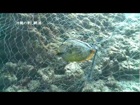 沖縄の刺し網漁映像