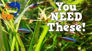 Every Fish Keeper Should Have These! 10 Things Every Fish Keeper Should Have!