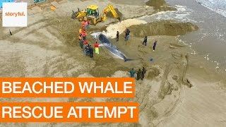 Volunteers Attempt Rescue of Beached Whale on Spanish Beach (Storyful, Animals)