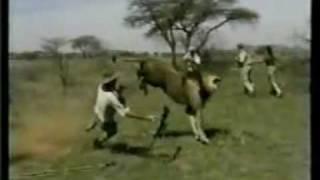 Lion Hunters.mpg
