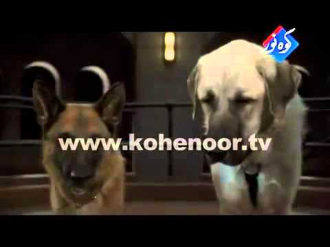 Funny Punjabi Dubbing Clips By Angraji Kohenoor Tv 2 video