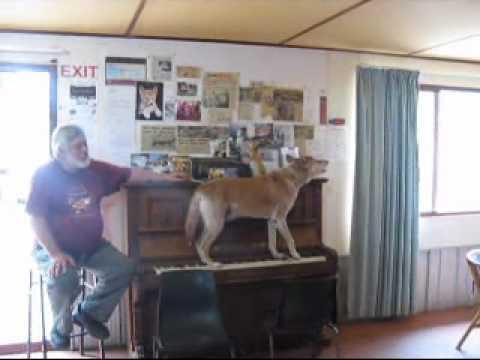 Perros - Un perro pianista y vocalista