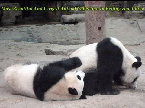 8 Most Beautiful And Largest Animal Collection In Beijing zoo, China