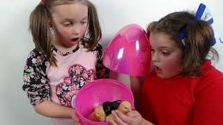 "Surprise Eggs Baby Chicks ""Annabelle Victoria Rex Toy Freaks Egg Style"""